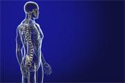 Salud Mayores. Cambios biológicos en personas mayores. Sistema esquelético